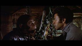 bataille-de-la-planete-des-singes-questionnement