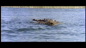 alligator-la-bête