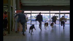 les-chiens-chasse-aux-voleurs