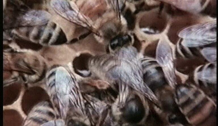 L'Invasion des abeilles tueuses – Rockne S. O'Bannon